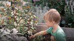Dreng i haven