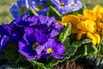 Blomster i krukke