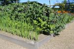Flotte højbede med lækre afgrøder