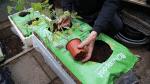 Plant tomatplante vandret i plantesækken