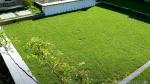 topdress af græsplæne med unikahaver