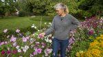 Janne køkkenhave blomster