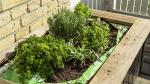 Krydderurter i plantesæk