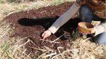 Permakultur så uden at grave